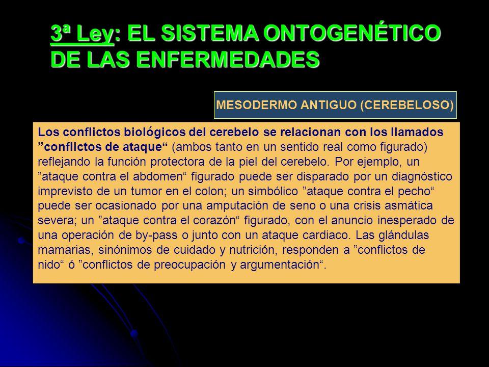 3ª Ley: EL SISTEMA ONTOGENÉTICO DE LAS ENFERMEDADES Los conflictos biológicos del cerebelo se relacionan con los llamados conflictos de ataque (ambos
