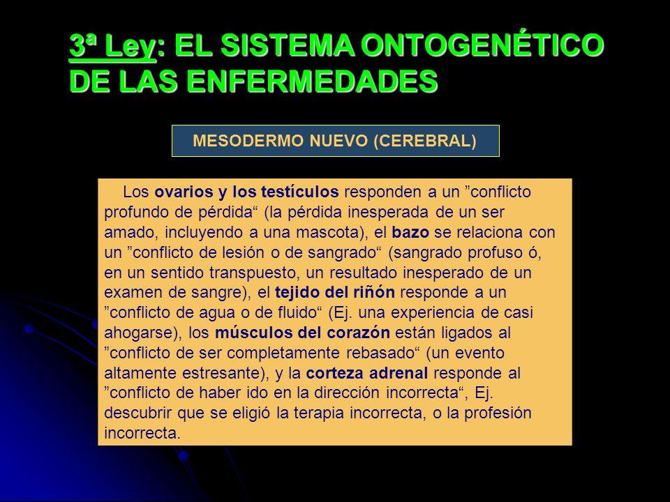 3ª Ley: EL SISTEMA ONTOGENÉTICO DE LAS ENFERMEDADES Los ovarios y los testículos responden a un conflicto profundo de pérdida (la pérdida inesperada de un ser amado, incluyendo a una mascota), el bazo se relaciona con un conflicto de lesión o de sangrado (sangrado profuso ó, en un sentido transpuesto, un resultado inesperado de un examen de sangre), el tejido del riñón responde a un conflicto de agua o de fluido (Ej.