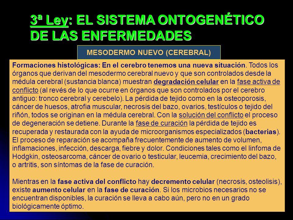 3ª Ley: EL SISTEMA ONTOGENÉTICO DE LAS ENFERMEDADES Formaciones histológicas: En el cerebro tenemos una nueva situación. Todos los órganos que derivan