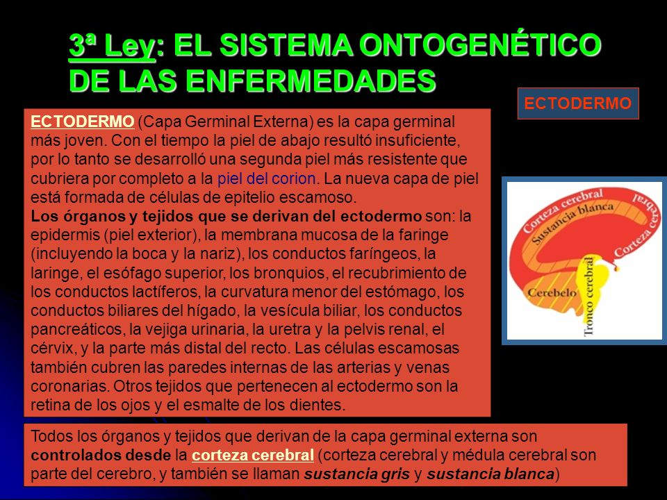 3ª Ley: EL SISTEMA ONTOGENÉTICO DE LAS ENFERMEDADES ECTODERMOECTODERMO (Capa Germinal Externa) es la capa germinal más joven. Con el tiempo la piel de