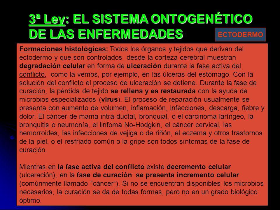 3ª Ley: EL SISTEMA ONTOGENÉTICO DE LAS ENFERMEDADES Formaciones histológicas: Todos los órganos y tejidos que derivan del ectodermo y que son controlados desde la corteza cerebral muestran degradación celular en forma de ulceración durante la fase activa del conflicto, como la vemos, por ejemplo, en las úlceras del estómago.