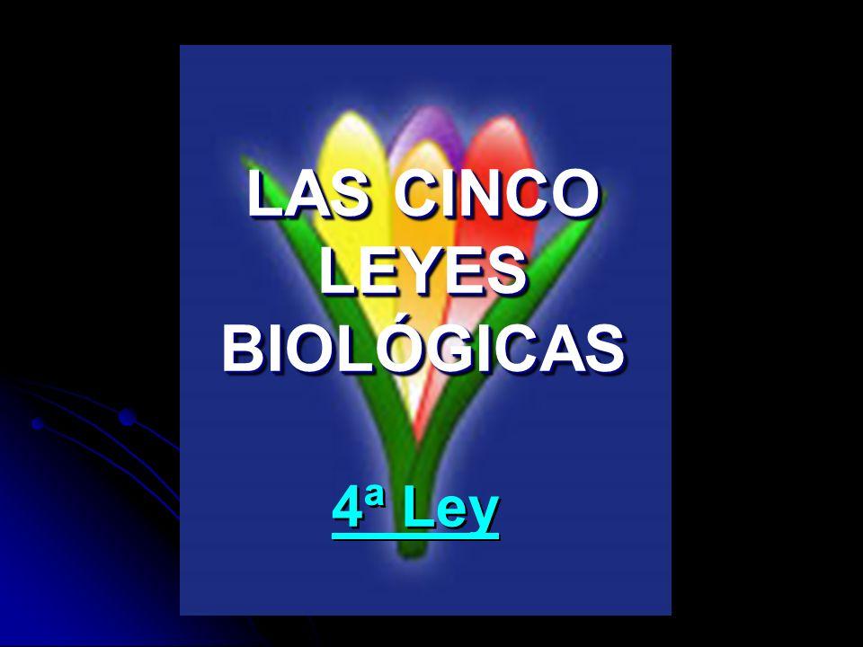 LAS CINCO LEYES BIOLÓGICAS 4ª Ley