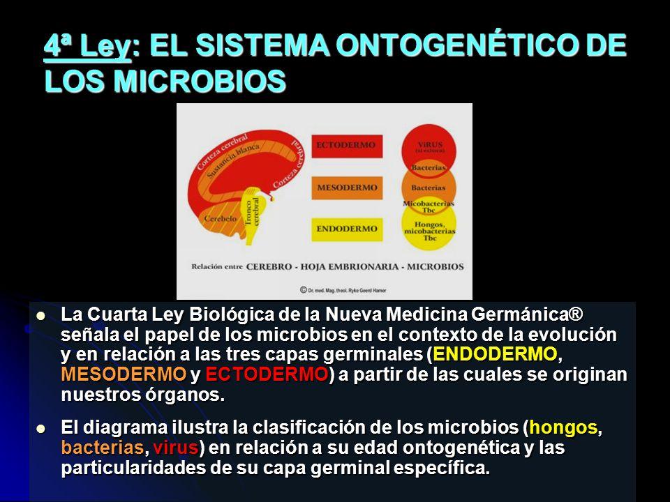 4ª Ley: EL SISTEMA ONTOGENÉTICO DE LOS MICROBIOS La Cuarta Ley Biológica de la Nueva Medicina Germánica® señala el papel de los microbios en el contexto de la evolución y en relación a las tres capas germinales (ENDODERMO, MESODERMO y ECTODERMO) a partir de las cuales se originan nuestros órganos.
