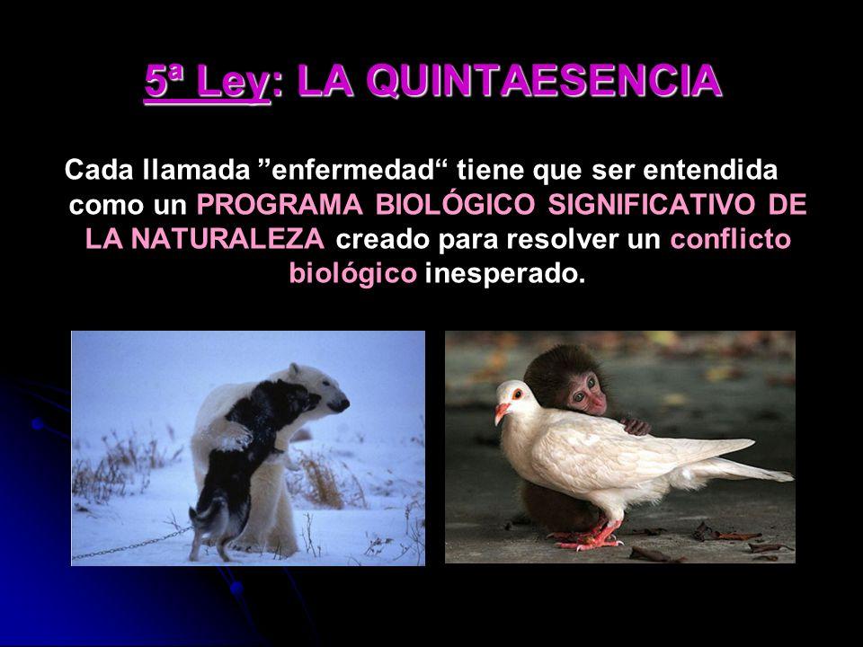 5ª Ley: LA QUINTAESENCIA Cada llamada enfermedad tiene que ser entendida como un PROGRAMA BIOLÓGICO SIGNIFICATIVO DE LA NATURALEZA creado para resolver un conflicto biológico inesperado.