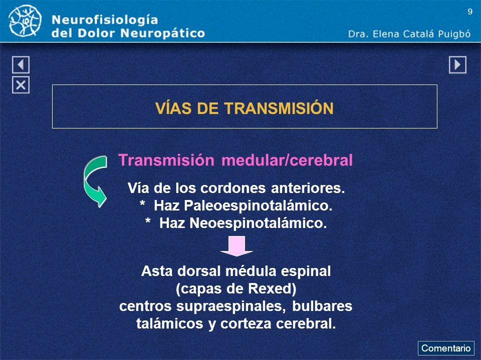 Transmisión medular/cerebral VÍAS DE TRANSMISIÓN Vía de los cordones anteriores. * Haz Paleoespinotalámico. * Haz Neoespinotalámico. Asta dorsal médul