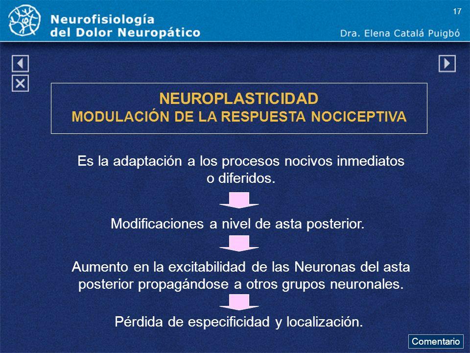 NEUROPLASTICIDAD MODULACIÓN DE LA RESPUESTA NOCICEPTIVA Es la adaptación a los procesos nocivos inmediatos o diferidos. Modificaciones a nivel de asta