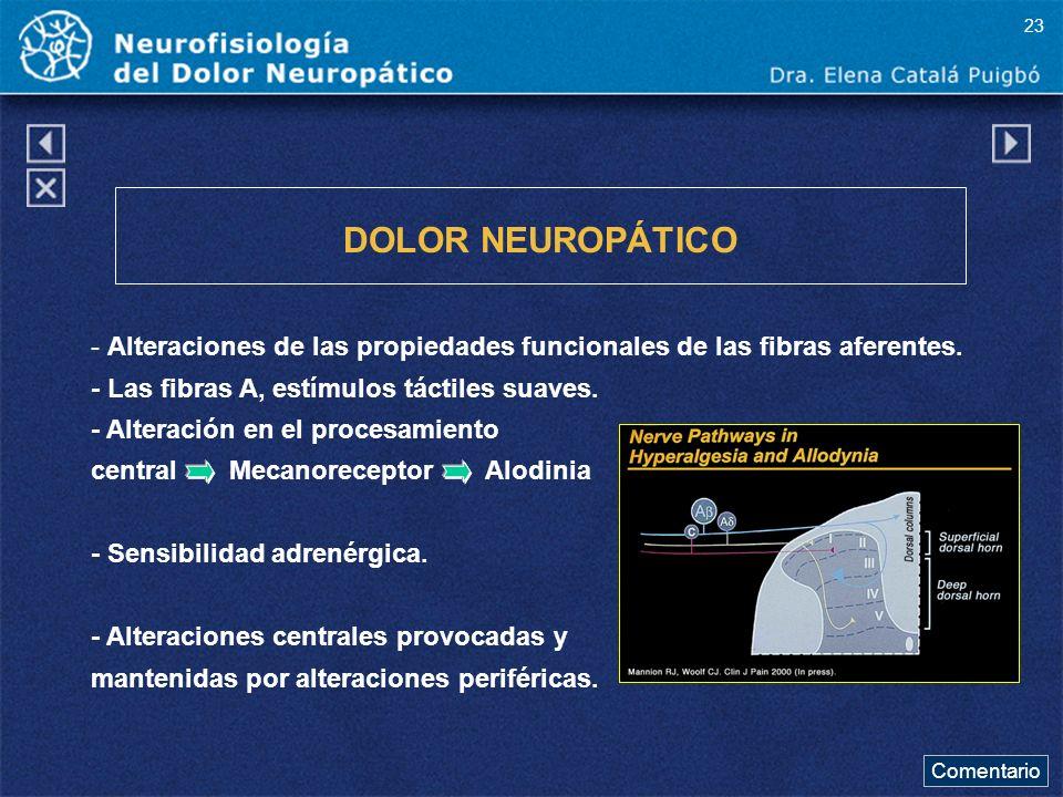 DOLOR NEUROPÁTICO - Alteraciones de las propiedades funcionales de las fibras aferentes. - Las fibras A, estímulos táctiles suaves. - Alteración en el