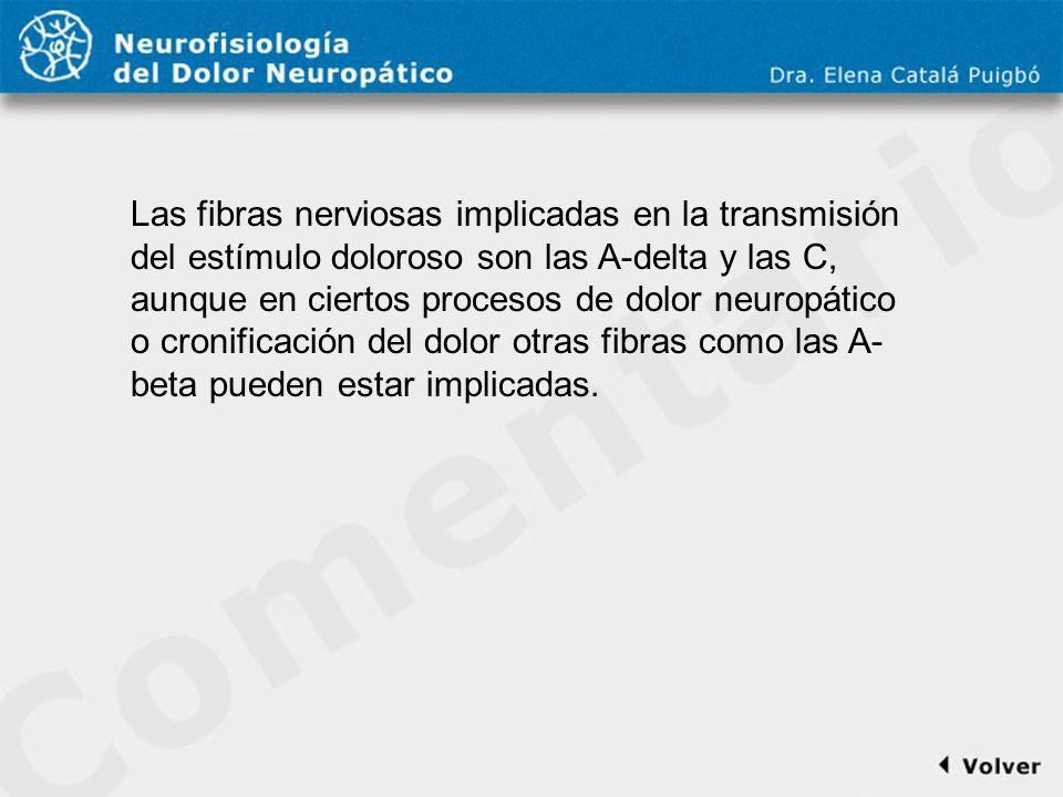 Comentario a diapo8 Las fibras nerviosas implicadas en la transmisión del estímulo doloroso son las A-delta y las C, aunque en ciertos procesos de dol