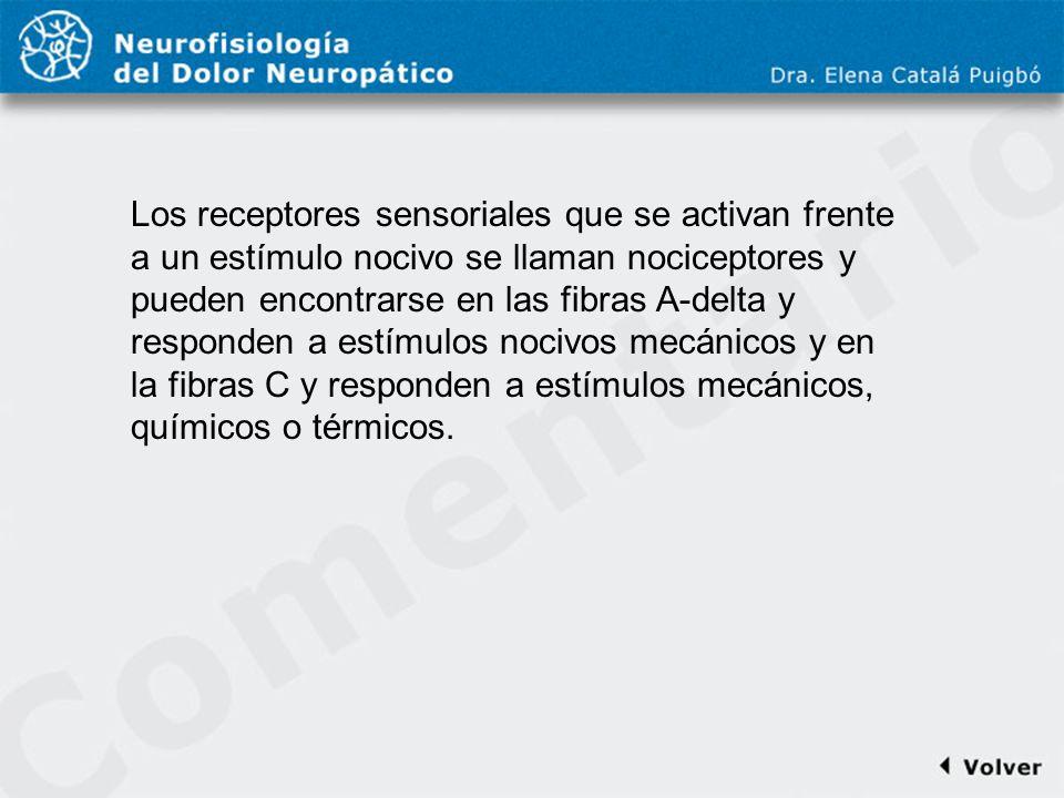 Comentario a diapo9 Los receptores sensoriales que se activan frente a un estímulo nocivo se llaman nociceptores y pueden encontrarse en las fibras A-