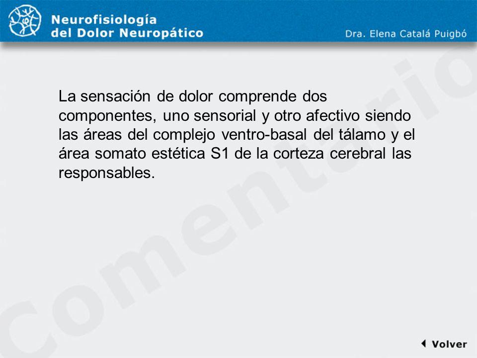 Comentario a diapo12 La sensación de dolor comprende dos componentes, uno sensorial y otro afectivo siendo las áreas del complejo ventro-basal del tál