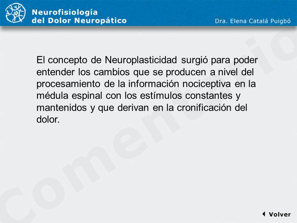 Comentario a diapo18 El concepto de Neuroplasticidad surgió para poder entender los cambios que se producen a nivel del procesamiento de la informació