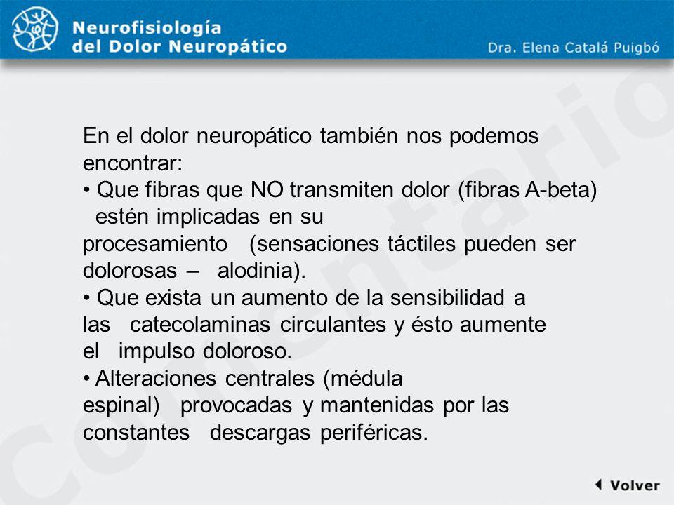 Comentario a diapo24 En el dolor neuropático también nos podemos encontrar: Que fibras que NO transmiten dolor (fibras A-beta) estén implicadas en su