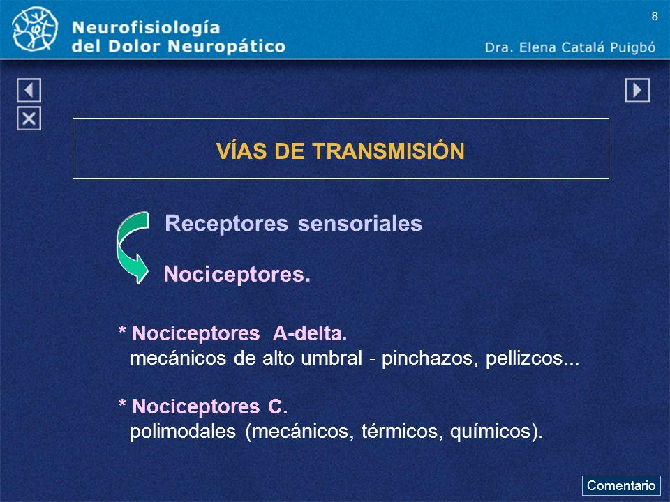 Receptores sensoriales VÍAS DE TRANSMISIÓN Nociceptores. * Nociceptores A-delta. mecánicos de alto umbral - pinchazos, pellizcos... * Nociceptores C.