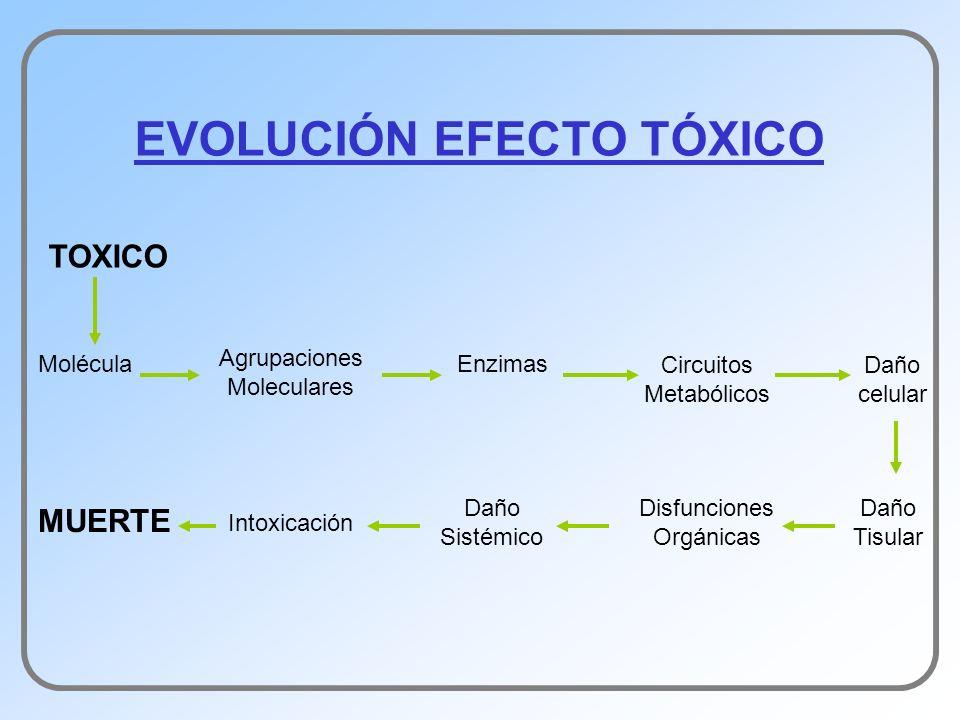 EVOLUCIÓN EFECTO TÓXICO TOXICO Agrupaciones Moleculares MoléculaEnzimas Circuitos Metabólicos Daño celular Daño Tisular Disfunciones Orgánicas Daño Si