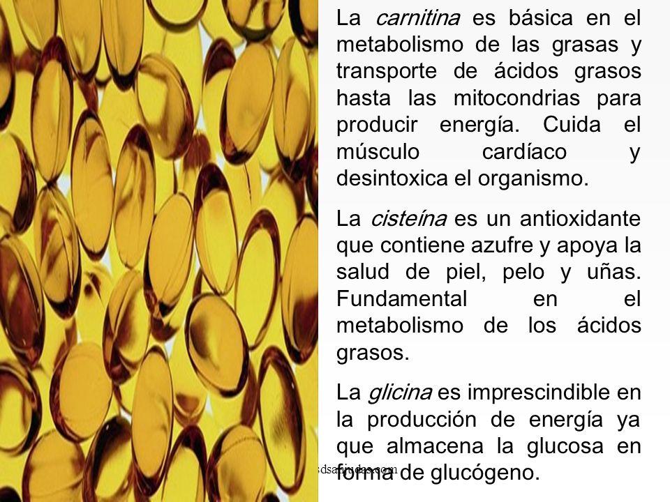 www.iasdsanjudas.com No esenciales. Los podemos fabricar a partir de los esenciales. En casos de error congénito o fallos de metabolismo, pueden pasar