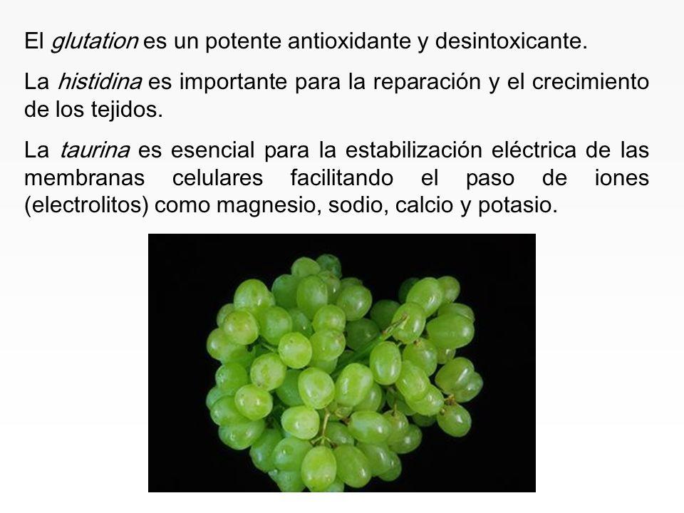 www.iasdsanjudas.com La carnitina es básica en el metabolismo de las grasas y transporte de ácidos grasos hasta las mitocondrias para producir energía