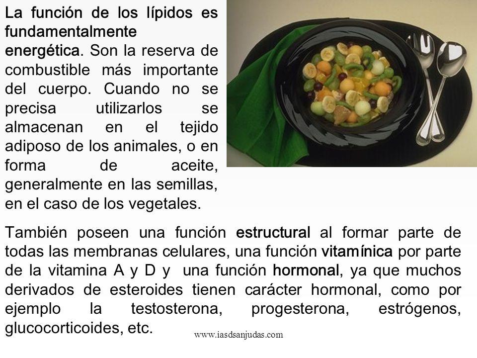 www.iasdsanjudas.com 3. Lípidos o grasas Lípido es el término que se emplea comúnmente para denominar las grasas que ingerimos en la dieta. Los lípido