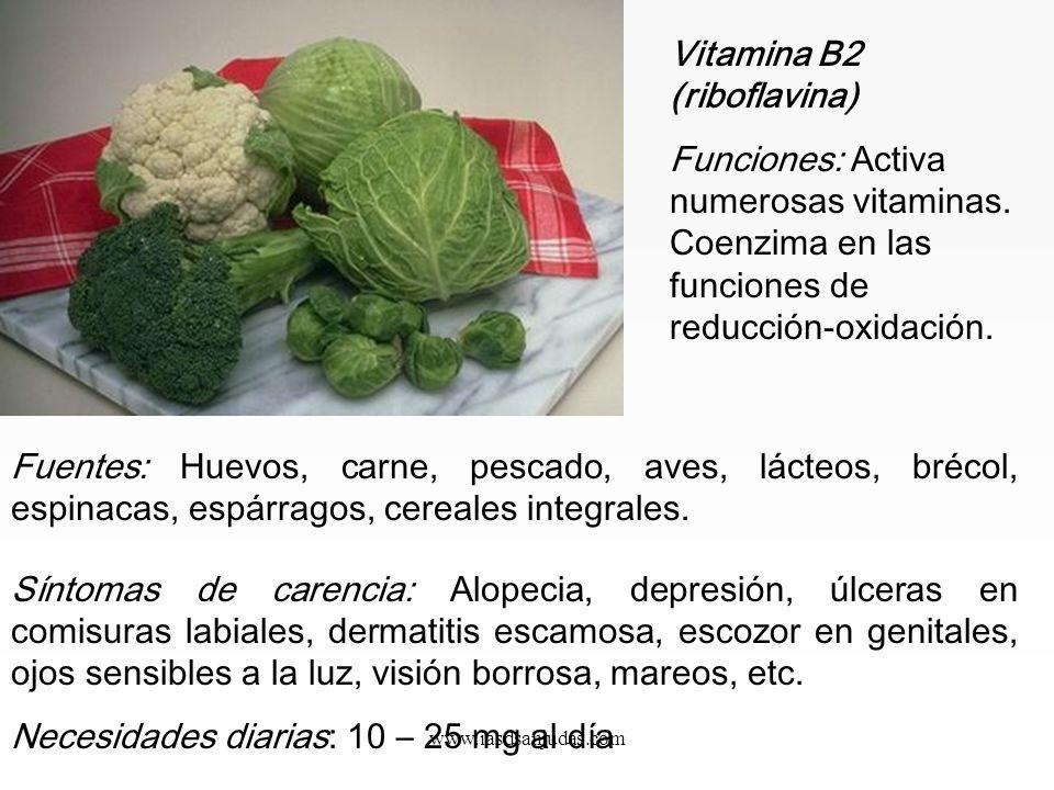 www.iasdsanjudas.com Fuentes: Granos y semillas. Levadura de cerveza. Judías verdes. Síntomas de carencia: Beri- beri. Pérdida de apetito, confusión y