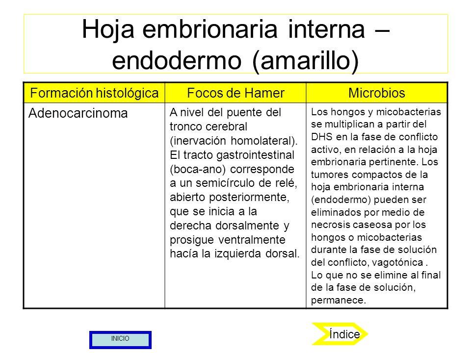 Hoja embrionaria interna – endodermo (amarillo) Índice Formación histológicaFocos de HamerMicrobios Adenocarcinoma A nivel del puente del tronco cereb