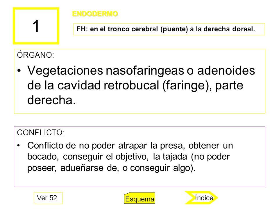 1 ÓRGANO: Vegetaciones nasofaringeas o adenoides de la cavidad retrobucal (faringe), parte derecha. CONFLICTO: Conflicto de no poder atrapar la presa,