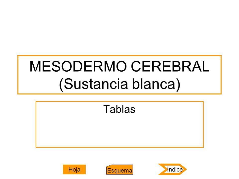MESODERMO CEREBRAL (Sustancia blanca) Tablas Índice Esquema Hoja
