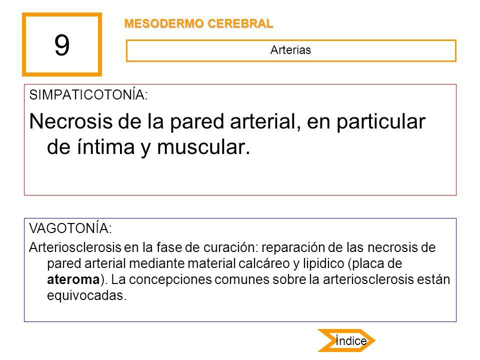 9 SIMPATICOTONÍA: Necrosis de la pared arterial, en particular de íntima y muscular. VAGOTONÍA: Arteriosclerosis en la fase de curación: reparación de