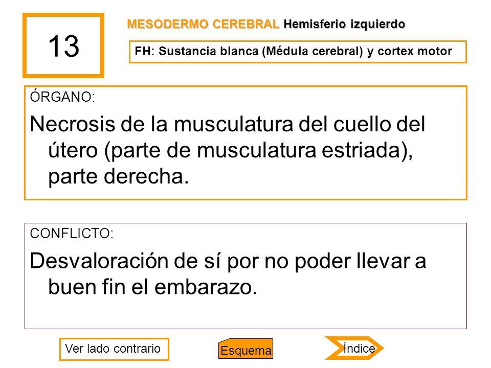 13 ÓRGANO: Necrosis de la musculatura del cuello del útero (parte de musculatura estriada), parte derecha. CONFLICTO: Desvaloración de sí por no poder