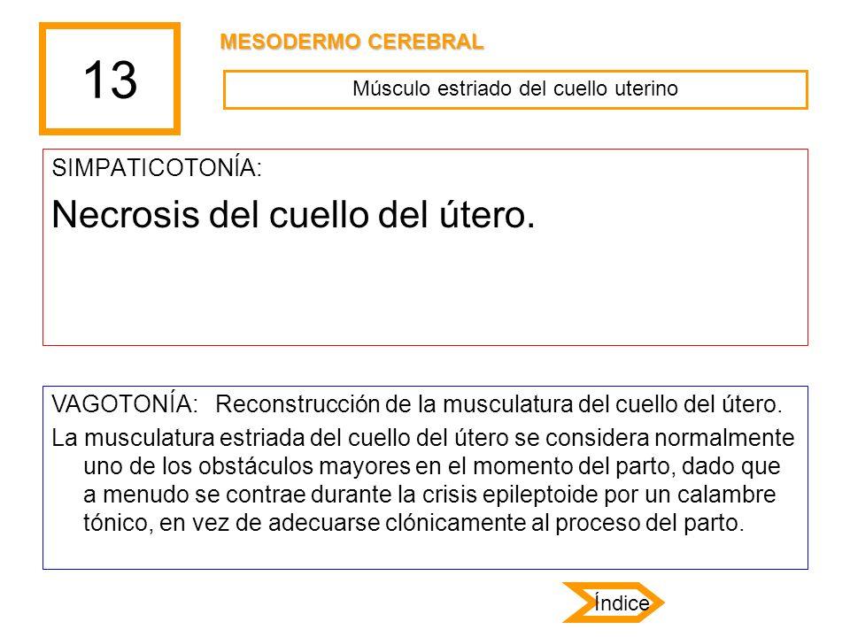 13 SIMPATICOTONÍA: Necrosis del cuello del útero. VAGOTONÍA: Reconstrucción de la musculatura del cuello del útero. La musculatura estriada del cuello