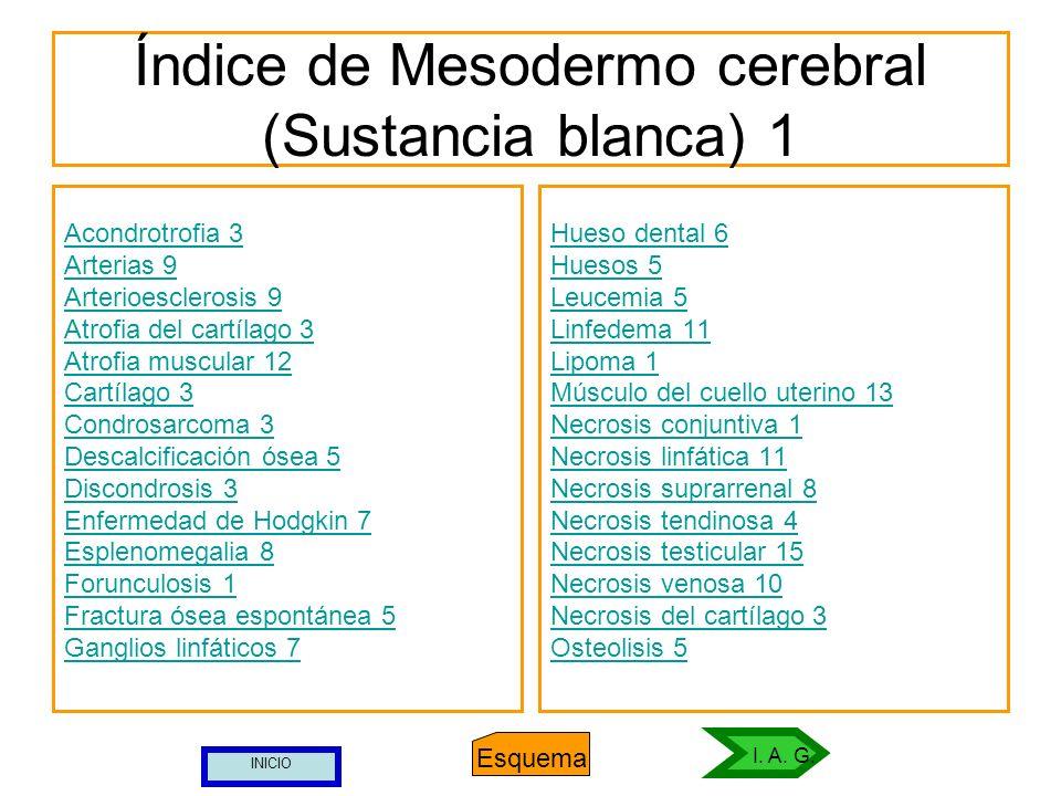 Índice de Mesodermo cerebral (Sustancia blanca) 1 Acondrotrofia 3 Arterias 9 Arterioesclerosis 9 Atrofia del cartílago 3 Atrofia muscular 12 Cartílago