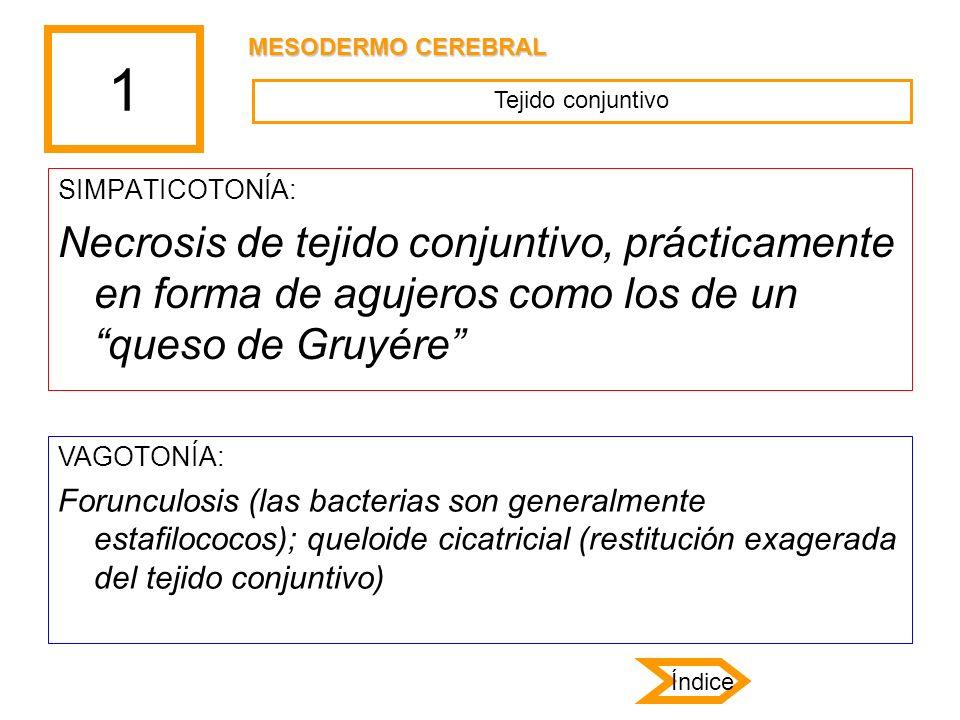 1 SIMPATICOTONÍA: Necrosis de tejido conjuntivo, prácticamente en forma de agujeros como los de un queso de Gruyére VAGOTONÍA: Forunculosis (las bacte