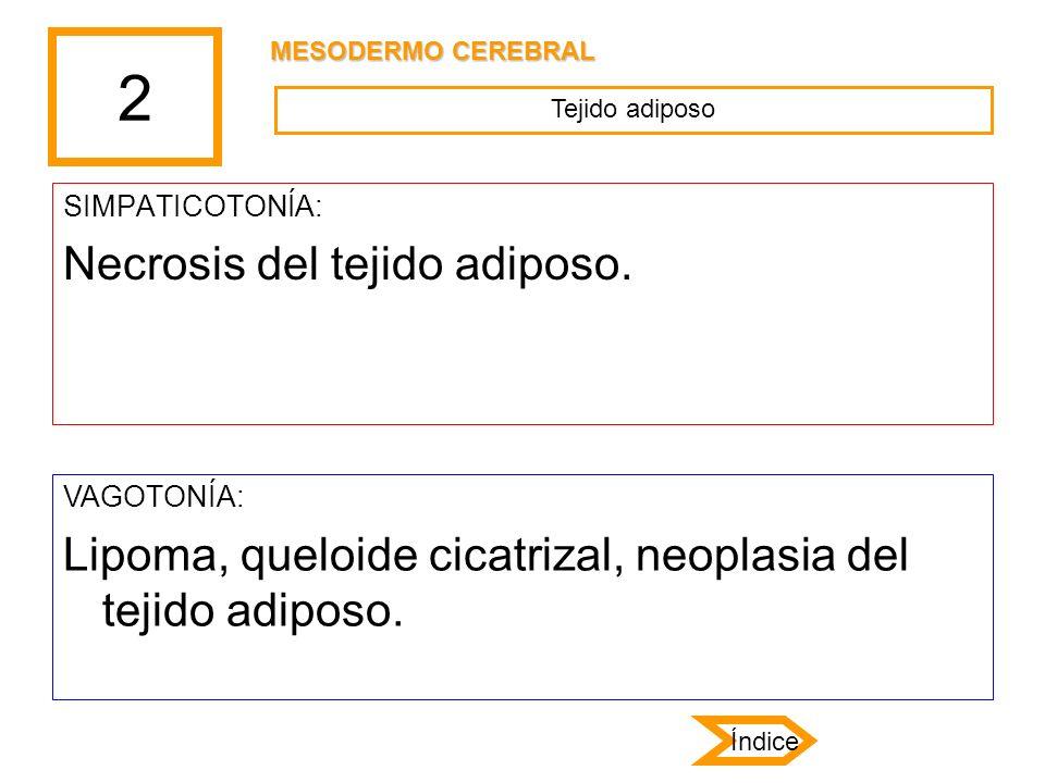 2 SIMPATICOTONÍA: Necrosis del tejido adiposo. VAGOTONÍA: Lipoma, queloide cicatrizal, neoplasia del tejido adiposo. Tejido adiposo MESODERMO CEREBRAL