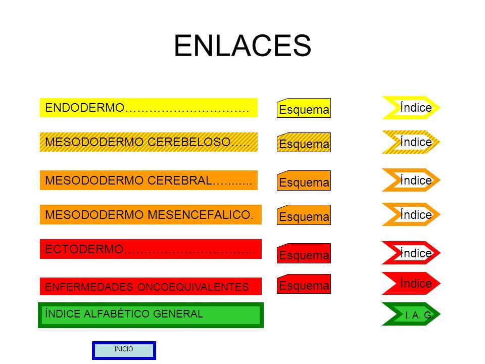 13 ÓRGANO: Necrosis del músculo esquelético (estriado) Lado izquierdo del cuerpo CONFLICTO: Conflicto de no poder escapar (piernas), de no poder empujar o agarrar algo (brazos) (Mirar esclerosis en placas, esclerosis múltiple) MESODERMO CEREBRAL Hemisferio derecho FH: Sustancia blanca y cortex motor Esquema Índice Ver lado contrario