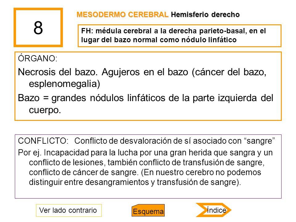 8 ÓRGANO: Necrosis del bazo. Agujeros en el bazo (cáncer del bazo, esplenomegalia) Bazo = grandes nódulos linfáticos de la parte izquierda del cuerpo.