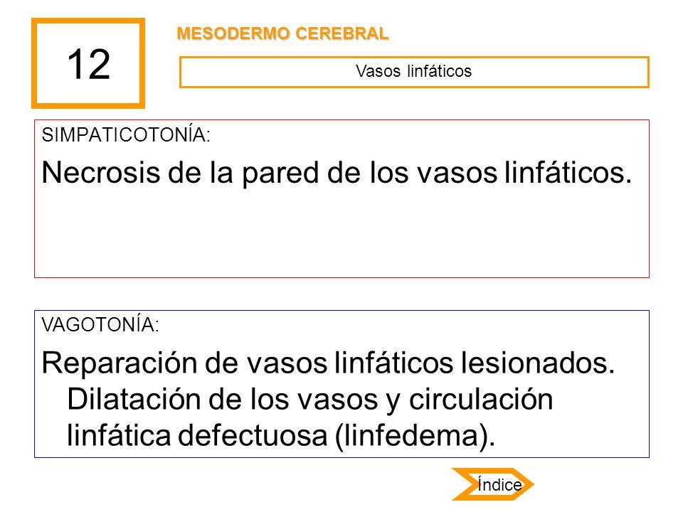 12 SIMPATICOTONÍA: Necrosis de la pared de los vasos linfáticos. VAGOTONÍA: Reparación de vasos linfáticos lesionados. Dilatación de los vasos y circu