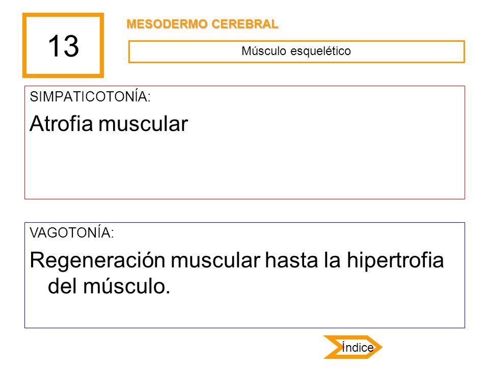 13 SIMPATICOTONÍA: Atrofia muscular VAGOTONÍA: Regeneración muscular hasta la hipertrofia del músculo. Músculo esquelético MESODERMO CEREBRAL Índice