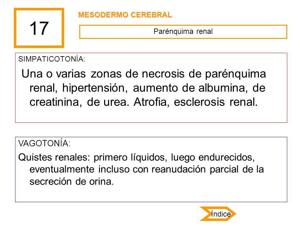 17 SIMPATICOTONÍA: Una o varias zonas de necrosis de parénquima renal, hipertensión, aumento de albumina, de creatinina, de urea. Atrofia, esclerosis