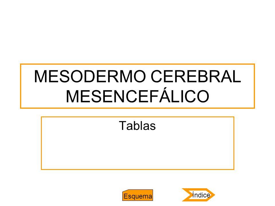 MESODERMO CEREBRAL MESENCEFÁLICO Tablas Índice Esquema
