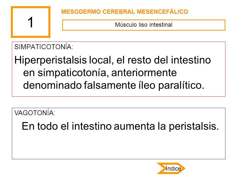 1 SIMPATICOTONÍA: Hiperperistalsis local, el resto del intestino en simpaticotonía, anteriormente denominado falsamente íleo paralítico. VAGOTONÍA: En