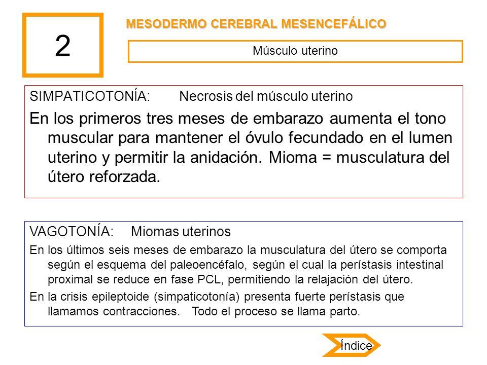 2 SIMPATICOTONÍA: Necrosis del músculo uterino En los primeros tres meses de embarazo aumenta el tono muscular para mantener el óvulo fecundado en el