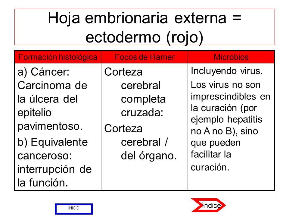 Hoja embrionaria externa = ectodermo (rojo) Formación histológicaFocos de HamerMicrobios a) Cáncer: Carcinoma de la úlcera del epitelio pavimentoso. b