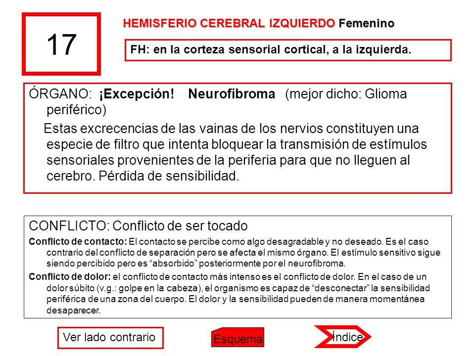 17 ÓRGANO: ¡Excepción! Neurofibroma (mejor dicho: Glioma periférico) Estas excrecencias de las vainas de los nervios constituyen una especie de filtro