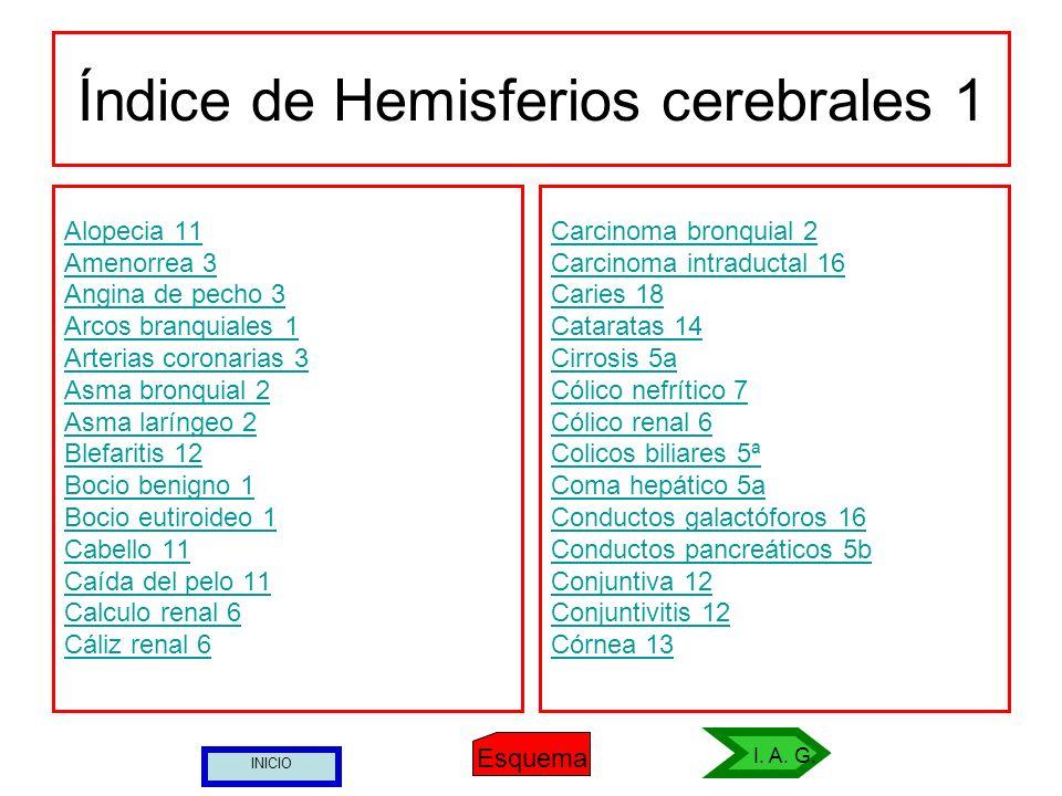 Índice de Hemisferios cerebrales 1 Alopecia 11 Amenorrea 3 Angina de pecho 3 Arcos branquiales 1 Arterias coronarias 3 Asma bronquial 2 Asma laríngeo