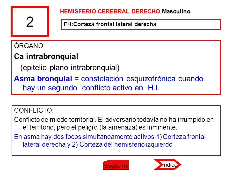 2 ÓRGANO: Ca intrabronquial (epitelio plano intrabronquial) Asma bronquial = constelación esquizofrénica cuando hay un segundo conflicto activo en H.I