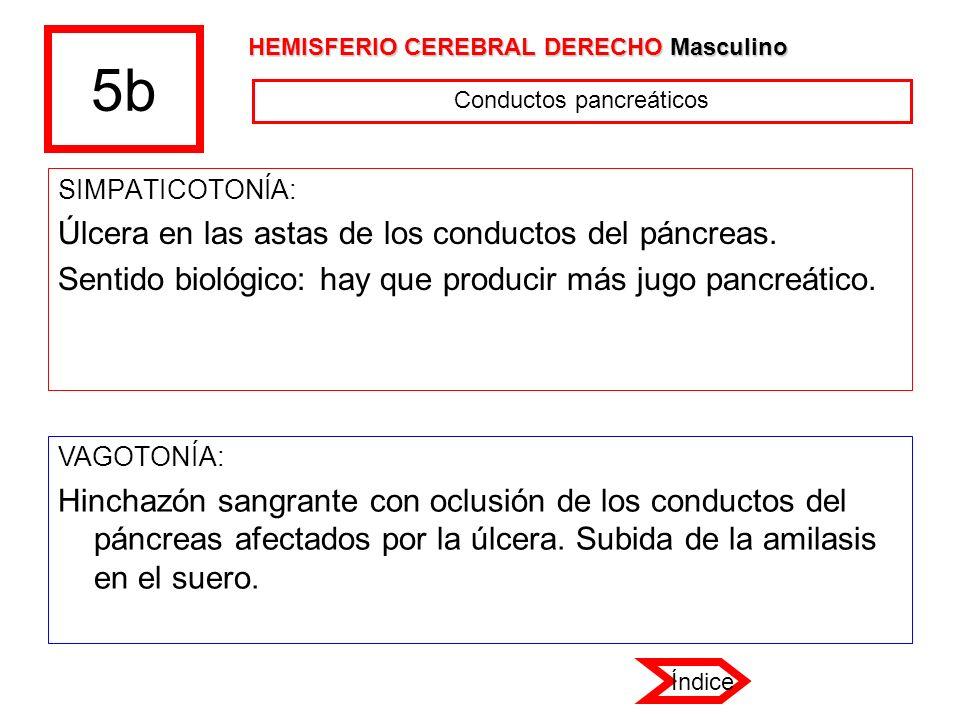 5b SIMPATICOTONÍA: Úlcera en las astas de los conductos del páncreas. Sentido biológico: hay que producir más jugo pancreático. VAGOTONÍA: Hinchazón s