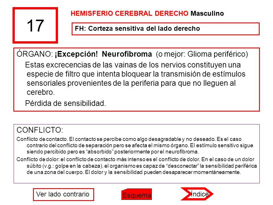17 ÓRGANO: ¡Excepción! Neurofibroma (o mejor: Glioma periférico) Estas excrecencias de las vainas de los nervios constituyen una especie de filtro que