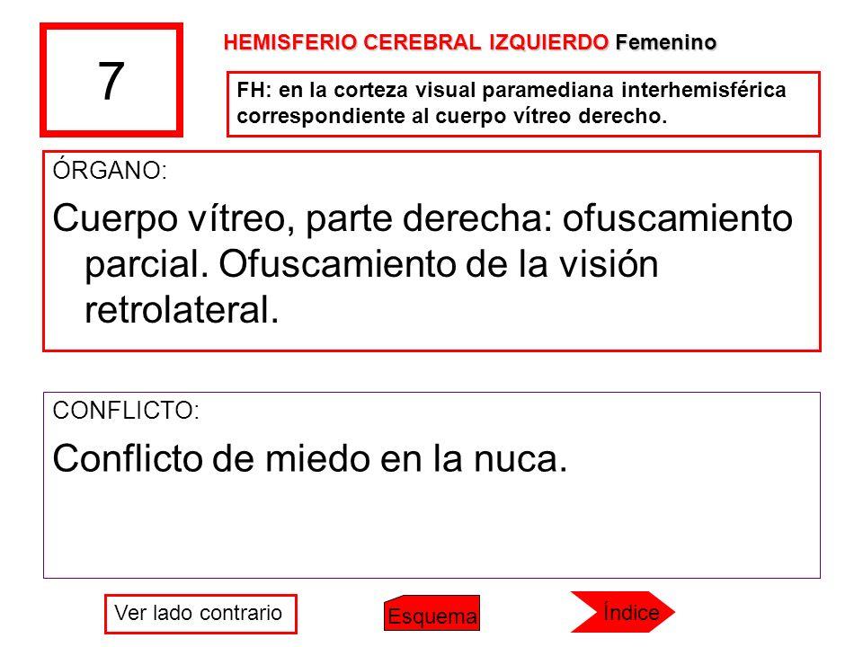 7 ÓRGANO: Cuerpo vítreo, parte derecha: ofuscamiento parcial. Ofuscamiento de la visión retrolateral. CONFLICTO: Conflicto de miedo en la nuca. FH: en