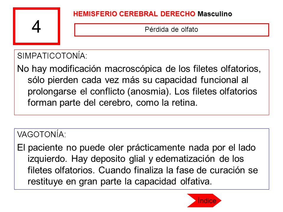 4 SIMPATICOTONÍA: No hay modificación macroscópica de los filetes olfatorios, sólo pierden cada vez más su capacidad funcional al prolongarse el confl
