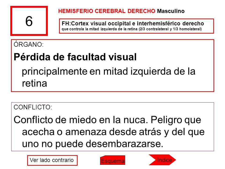 6 ÓRGANO: Pérdida de facultad visual principalmente en mitad izquierda de la retina CONFLICTO: Conflicto de miedo en la nuca. Peligro que acecha o ame