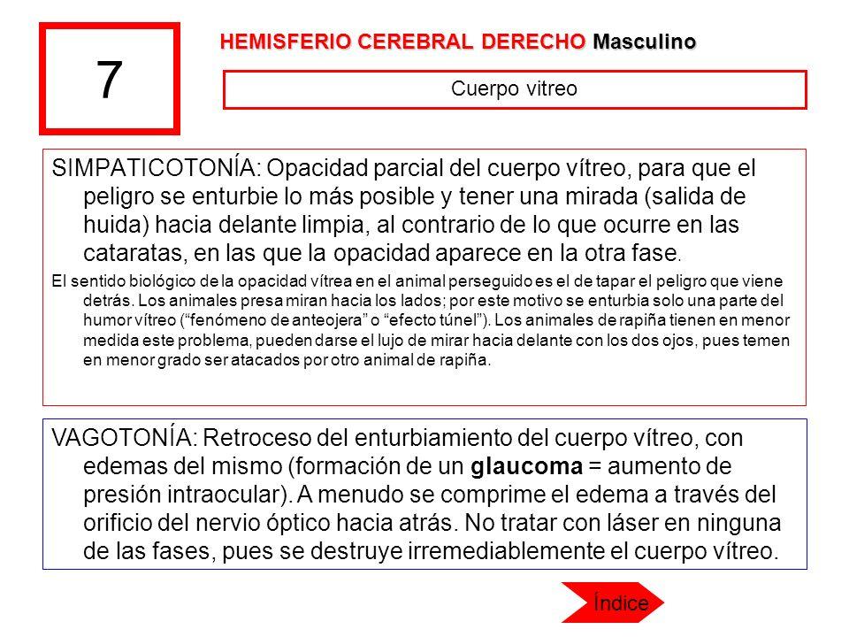 7 SIMPATICOTONÍA: Opacidad parcial del cuerpo vítreo, para que el peligro se enturbie lo más posible y tener una mirada (salida de huida) hacia delant
