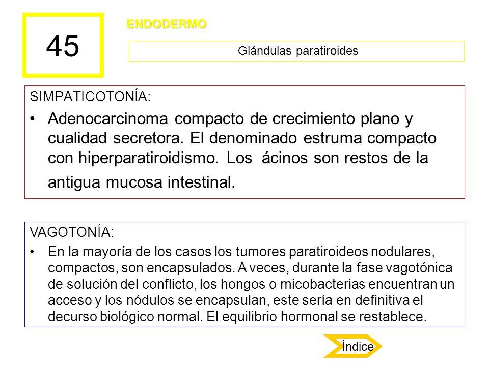 45 SIMPATICOTONÍA: Adenocarcinoma compacto de crecimiento plano y cualidad secretora. El denominado estruma compacto con hiperparatiroidismo. Los ácin